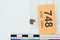 A fragment of silver pressblech foil from a helmet (FindID 554113).jpg