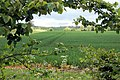 A gap in a hedge - geograph.org.uk - 1305014.jpg