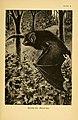 A history of British mammals (Plate X) (6383351415).jpg