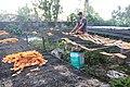 A man dries chicharon in Camarines Sur.jpg