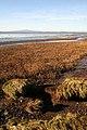 A saltmarsh habitat - geograph.org.uk - 1061842.jpg