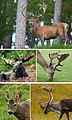 A special composite of deers.jpg