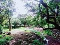 A swamp beside University Avenue, U.P. Diliman, Quezon City.jpg