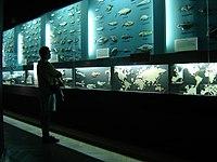 Gdynia Aquarium - Wikipedia