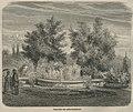 Akwarium dla roślin krajowych (58347).jpg