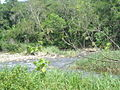 Aldeia Rio Branco - Mata Atlântica - Monguaguá-SP - 1.JPG