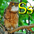 Alfabet zwierząt - literka S.png