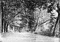 Allée dans le parc, Pau, octobre 1891 (2909903038).jpg