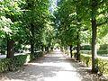 Allee Schönbrunn.JPG