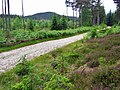 Alltcailleach Forest - geograph.org.uk - 866217.jpg