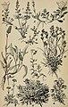 Alpenflora; die verbreitetsten Alpenpflanzen von Bayern, Österreich und der Schweiz (1922) (18083003146).jpg