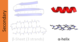 Alpha helix type of secondary structure