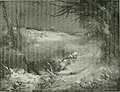 Alphabet du piégeage (1911) (14759912336).jpg