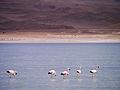 Altiplano, Bolivien (11214299804).jpg