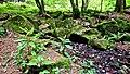 Am Bilstein bei Breungeshain und Busenborn - Große Steine im Wald.jpg