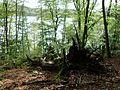 Am Grossen Treppelsee im Schlaubetal.jpg