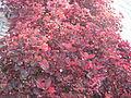 Amin al-Islami Park - Trees and Flowers - Nishapur 016.JPG