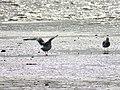 Amrum, Vogelschutzgebiet.jpg