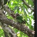 An enticing bird.jpg