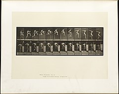Animal locomotion. Plate 153 (Boston Public Library).jpg