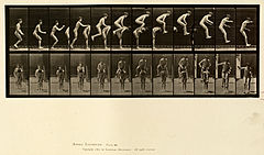 Animal locomotion. Plate 168 (Boston Public Library).jpg
