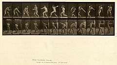 Animal locomotion. Plate 284 (Boston Public Library).jpg