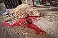Animal sacrifice at Eid at Adha 14.jpg