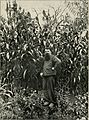 Annales de la science agronomique franaise et trangre (1884-1930) (17580735583).jpg