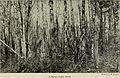 Annual report (1909) (14751441482).jpg