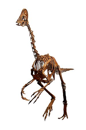 Anzu (dinosaur) - Reconstructed skeleton, Carnegie Museum of Natural History