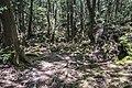 Aokigara forest near wind cave 01.jpg