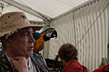 Ara ararauna -Lambeth Country Show -London-6b.jpg