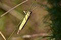 Araignées, insectes et fleurs de la forêt de Moulière (Les Agobis) (28732653210).jpg
