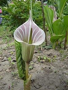 30 cm inside the anus - 5 9
