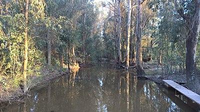Arroyo de la Rocina, Parque Natura de Doñana.jpg