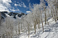 Aspen Mountain ski area aspen trees FIS chair.jpg