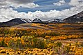 Aspen Tree Fall Yellow Color off Conway Summit.jpg