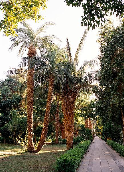 أصحابى وصحباتى ..تعرف / تعرفي على اجمل الحدائق في العالم / موضوع متجدد - صفحة 2 435px-Aswan%2C_Kitchener%27s_Island%2C_palm_trees%2C_Egypt%2C_Oct_2004