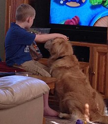 A service dog encourages outward expression from a young boy with autism.