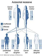 von Willebrand disease type III (and sometimes II) is inherited in an autosomal recessive pattern.