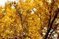 Autumn (5131890064).jpg