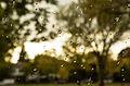 Autumn Rain (15573309597).jpg