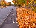 Autumn along Meridian East - geograph.org.uk - 1026867.jpg