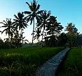 Balinese Farm.jpg