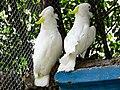 Bangabandhu Sheikh Mujib Safari Park-3.jpg