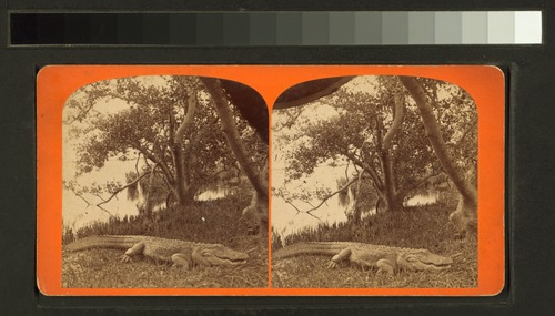 Basking in the sunshine (NYPL b11707406-G90F130 002F).tiff
