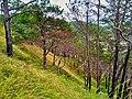 Bauko Peaks in Benguet - 4.jpg