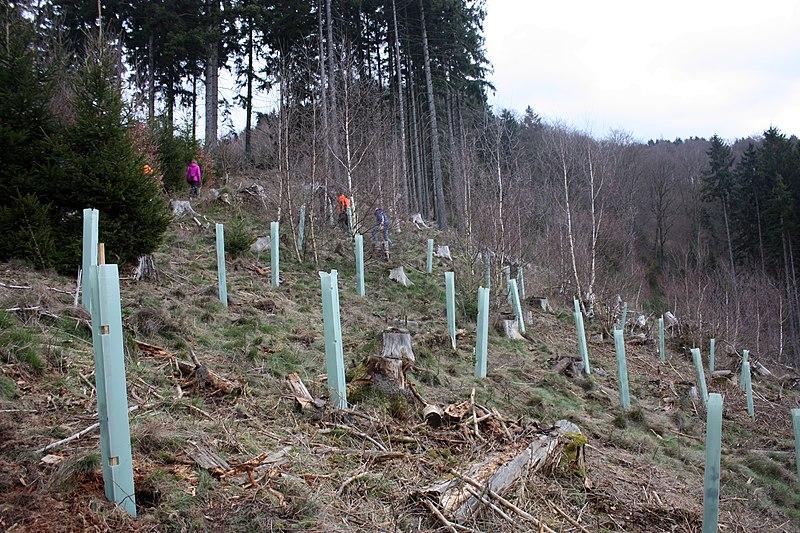 File:Baumpflanzaktion Bergwaldprojekt Werdohl 2015 2.jpg