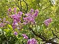 Beautifull Tree.jpg