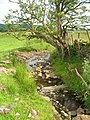 Beck near Littlebank - geograph.org.uk - 1393955.jpg